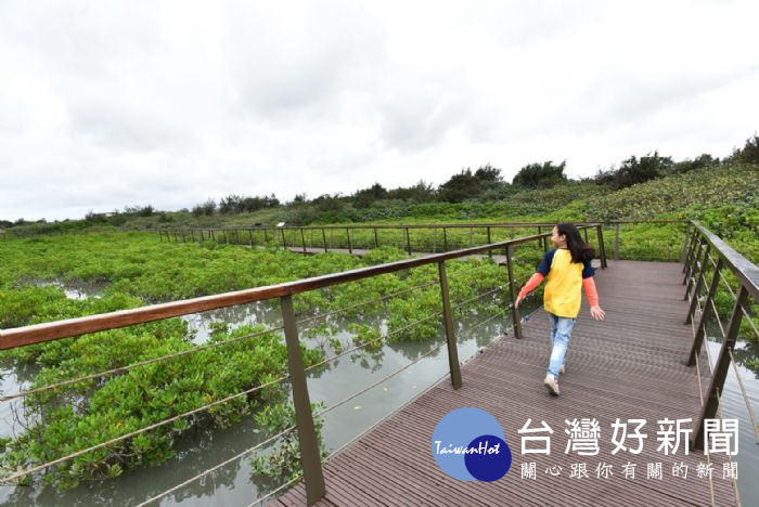 許厝港濕地濱海木棧道啟用 每年約180多種候鳥經過