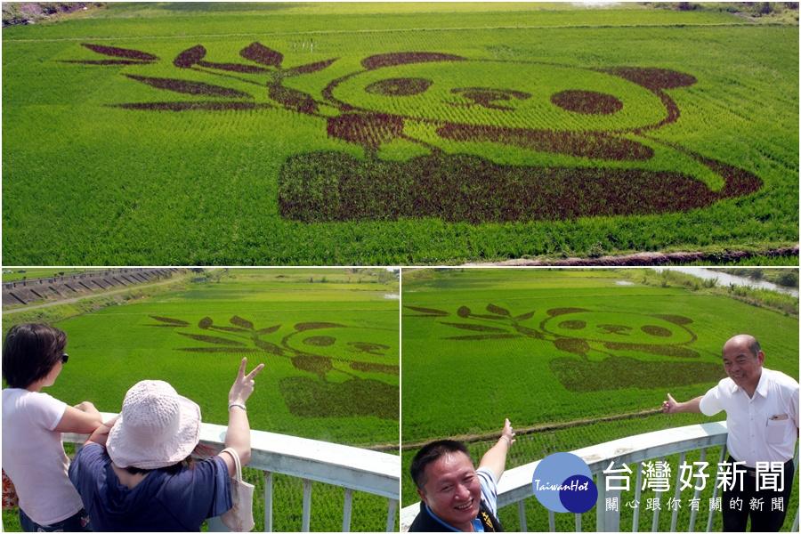 壯圍新亮點 在稻田看見萌萌貓熊