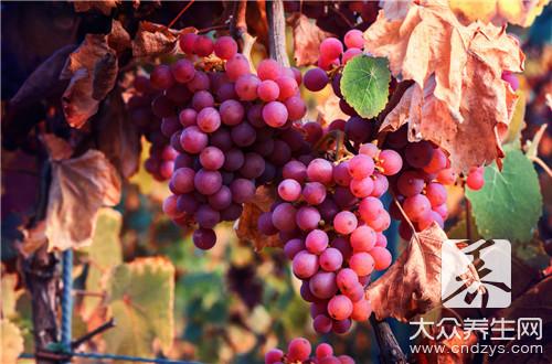 葡萄是屬於涼性水果嗎