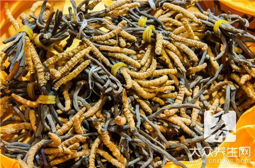吃蟲草上火嗎?